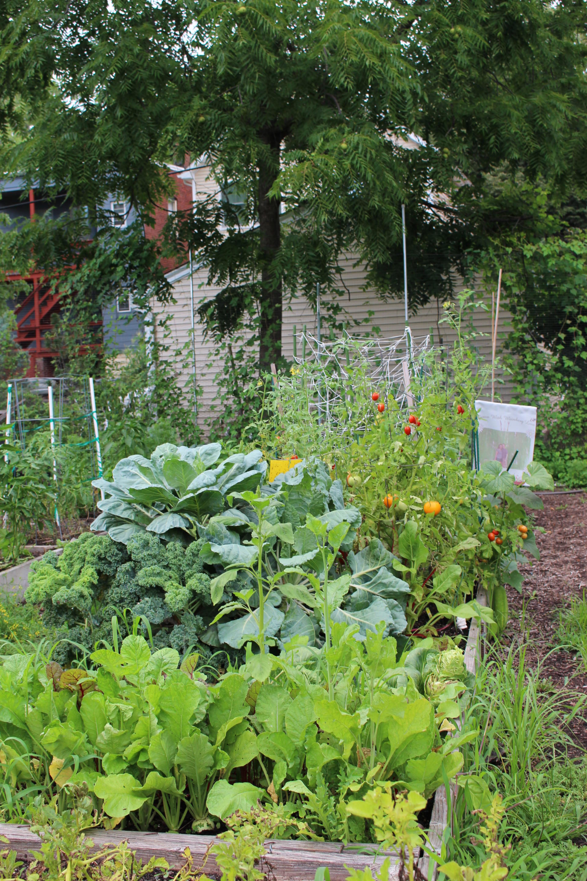 VEGGIES: Community Garden Update