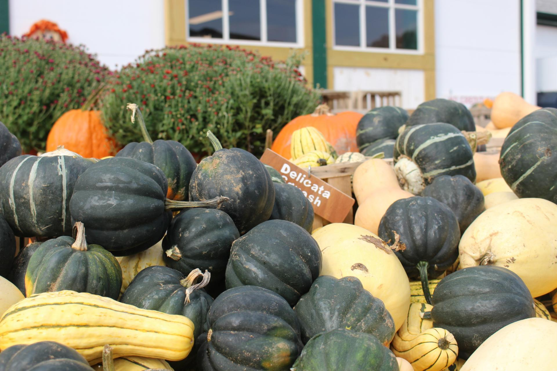 LOCAL: Apple Picking and Pumpkin Patching at Riamede Farm